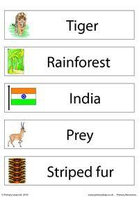 Set of 5 flashcards - Bengal tiger
