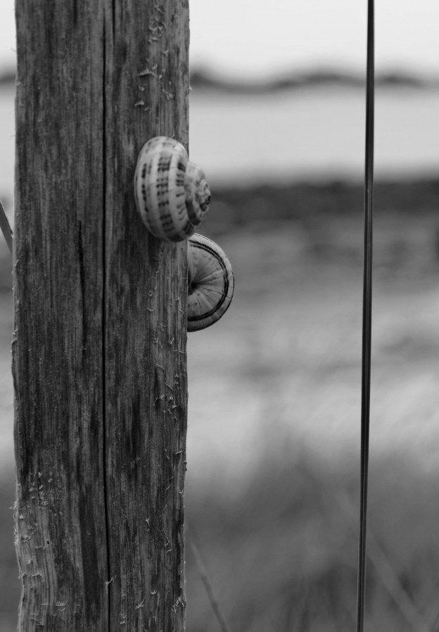 escargots sur chemin côtier de Guissény