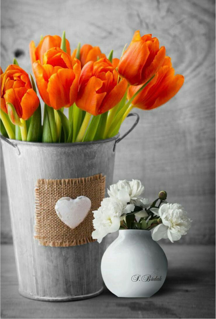 тюльпаны в ведре фото игра-викторина