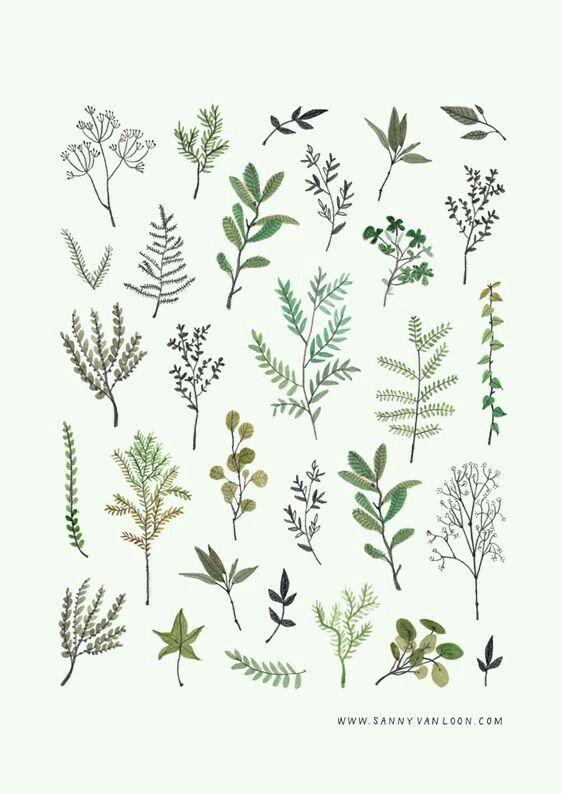 Find botanical prints of Tasmanian ferns for tiles