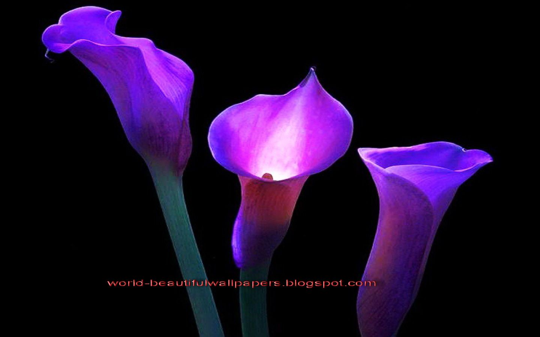 Dark purple lily flower tattoos google search tattoos dark purple lily flower tattoos google search izmirmasajfo