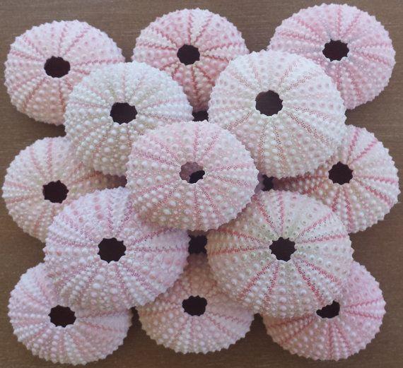 Sea Urchin Shell Crafts