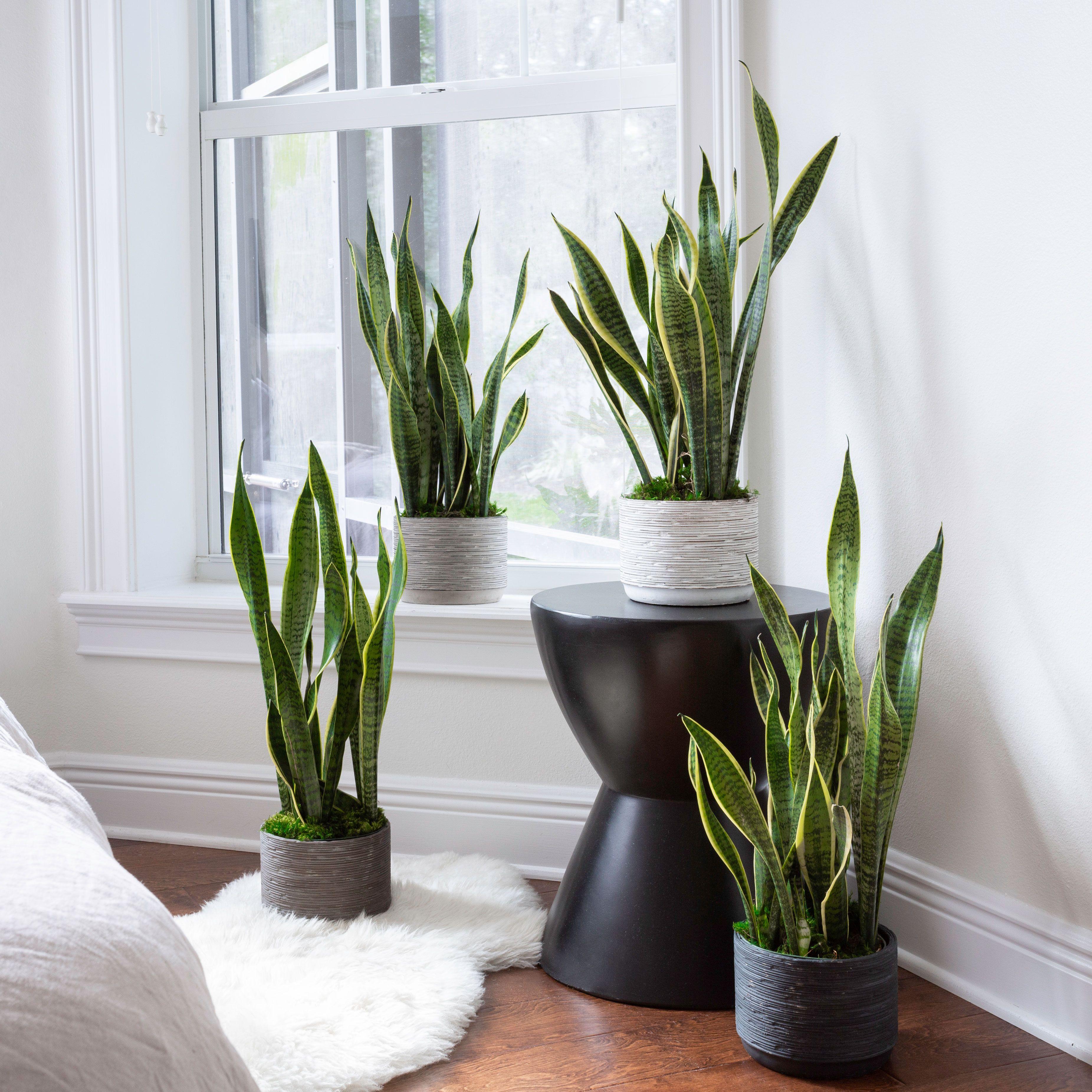 Plantas Duras De Interior