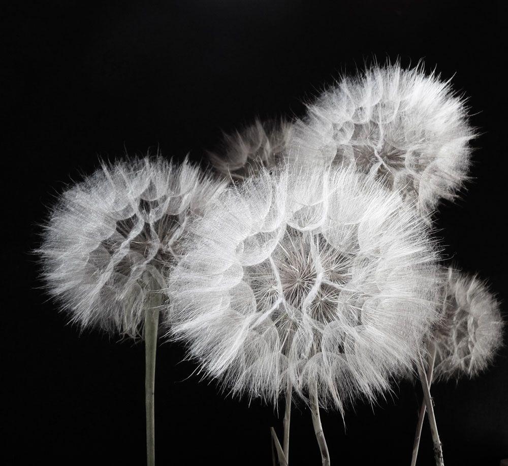 Black And White Pinterest Black Paper Black White Photography