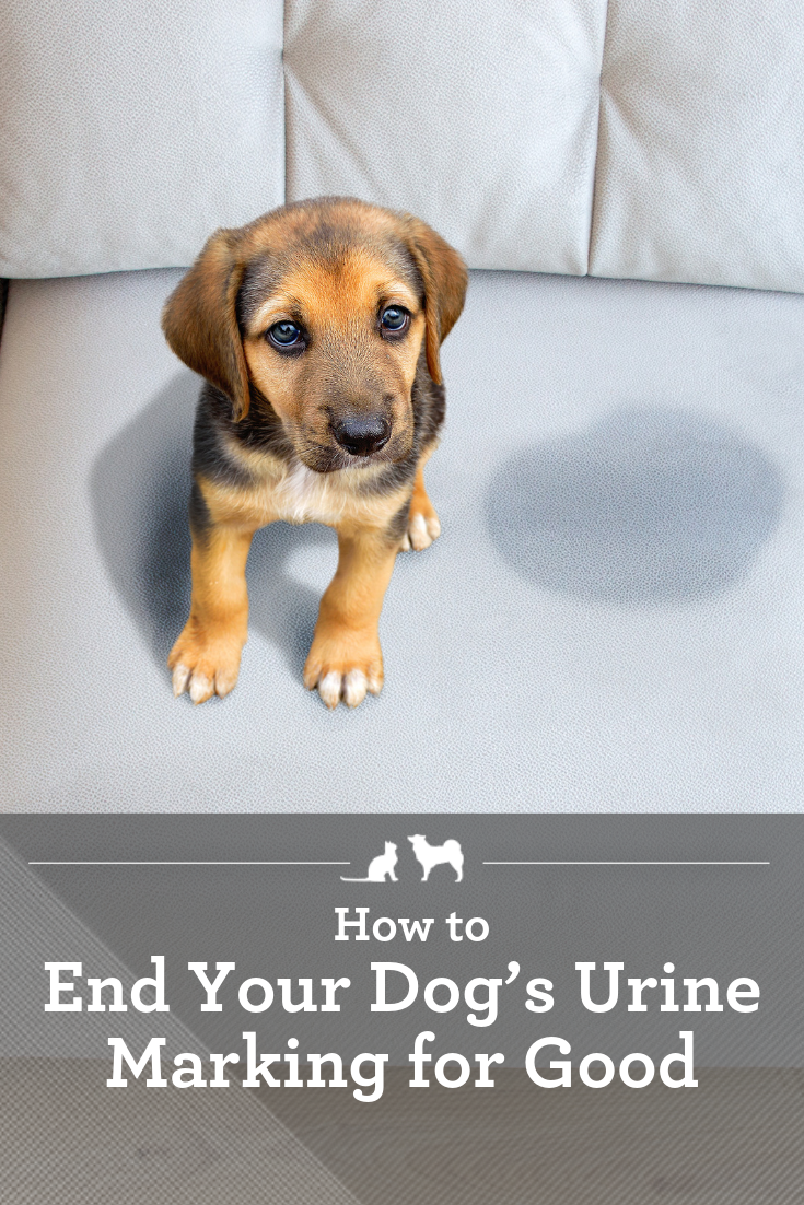 How To End Your Dog S Urine Marking For Good Dog Marking Territory Puppy Care Your Dog