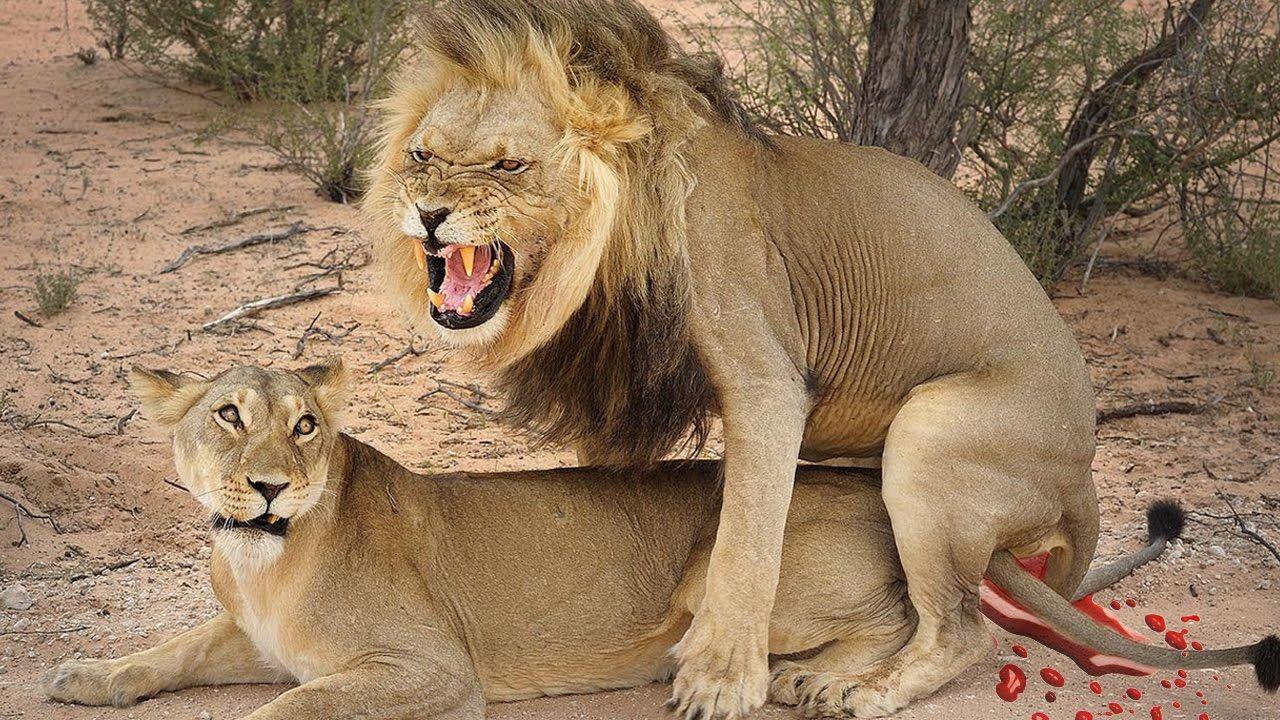 Animal mating call