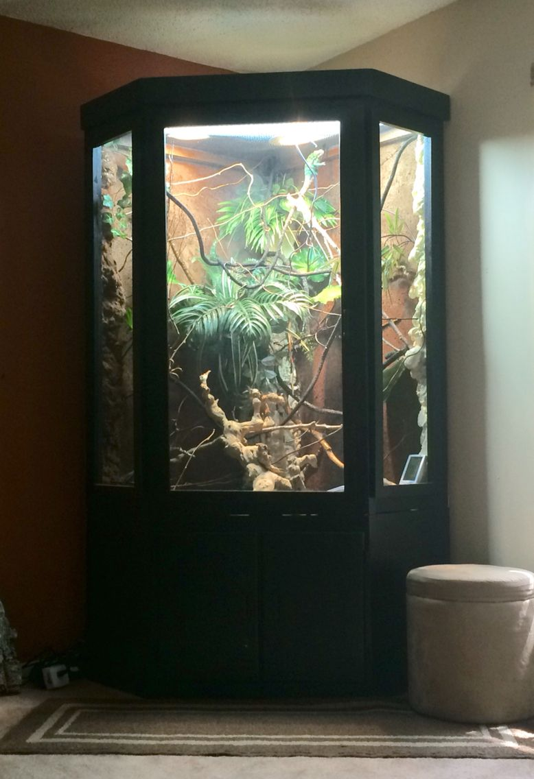Diy chameleon reptile furniture cage that my father and i built for