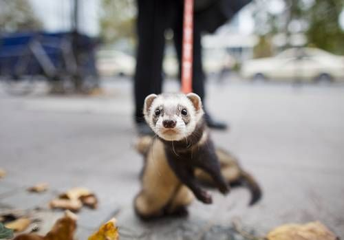 October faces: The best animal images of the month.