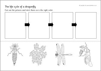 dragonfly life cycle cut and stick activity sb10862 sparklebox biol gia pinterest. Black Bedroom Furniture Sets. Home Design Ideas