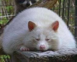 Pin On Fat Animals
