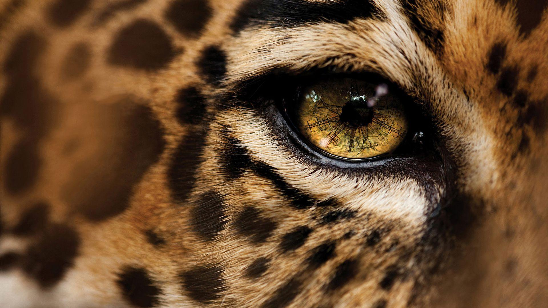 Cheetah Computer Wallpapers Desktop Backgrounds ID 1920x1200 Images 44