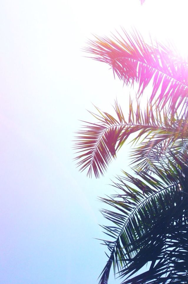 Summer Vibes Aesthetic Palm Trees Iphone Wallpaper Wallpaper