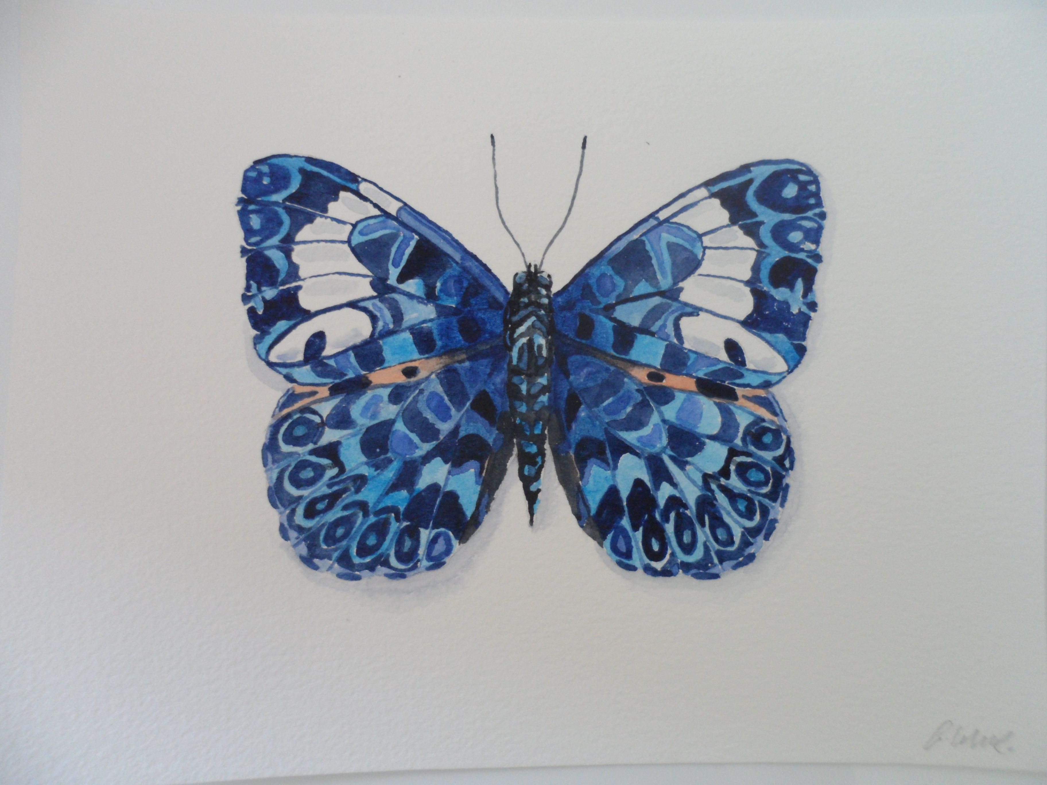 Blue Hamadryas Butterfly watercolour by Frances de ...