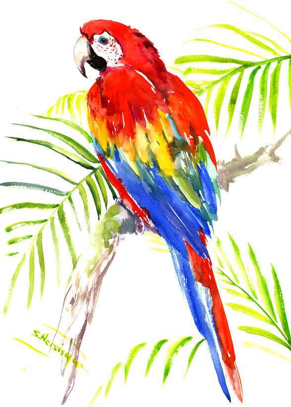 Scarlet Macaw Original Watercolor Painting Bright Tropical Bird