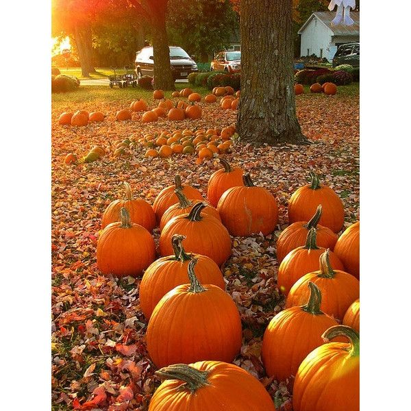 Autumn/Fall Halloween ❤ liked on Polyvore featuring backgrounds, pictures, fall, photos, halloween and fillers