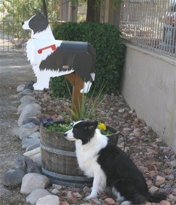 """Penny"" with her Mailbox . Custom painted Border Collie Mailbox"