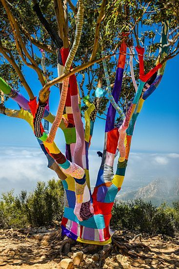 Another fantastic yarn bombed tree. The work that has gone into this is incredible.