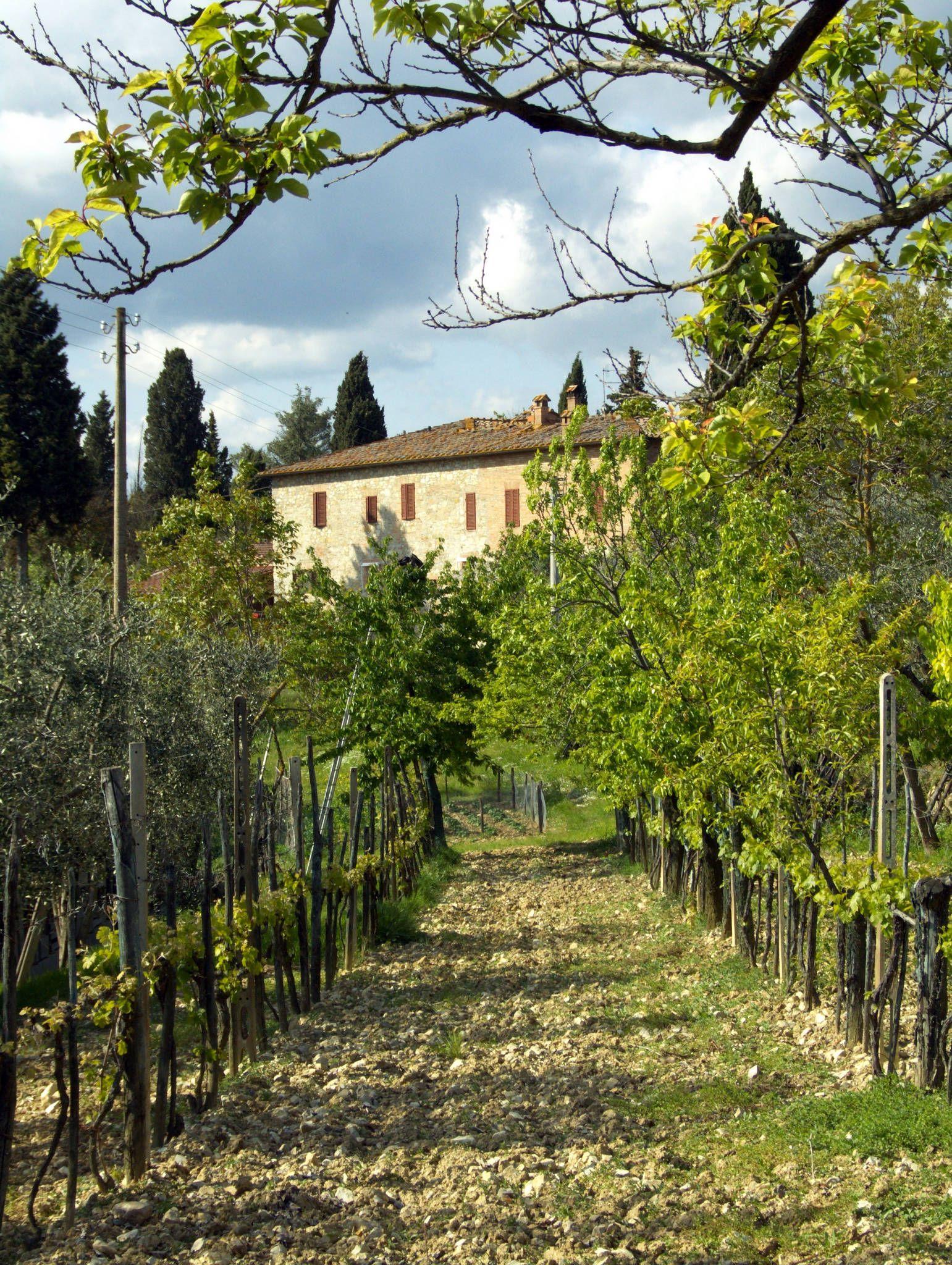 De Chianti is een van de bekendste Europese wijngebieden en ook een van de mooiste streken van Europa waarin een prachtige autoroute loopt door glooiende landschappen. De Chianti ligt tussen De Toscaanse kunststad Florence en Siena. Tussen de wijngaarden groeien cipressen en olijfbomen.