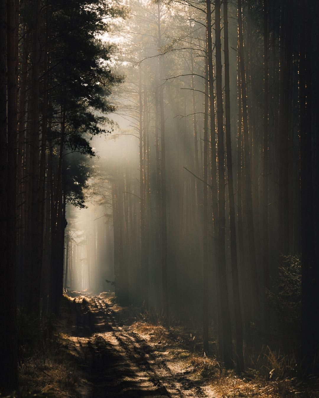 Pin By Ghost On Lost In The Woods In 2020 Aesthetic Photography Nature Forest Pictures Forest Landscape