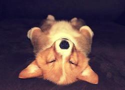 Dog in meditation