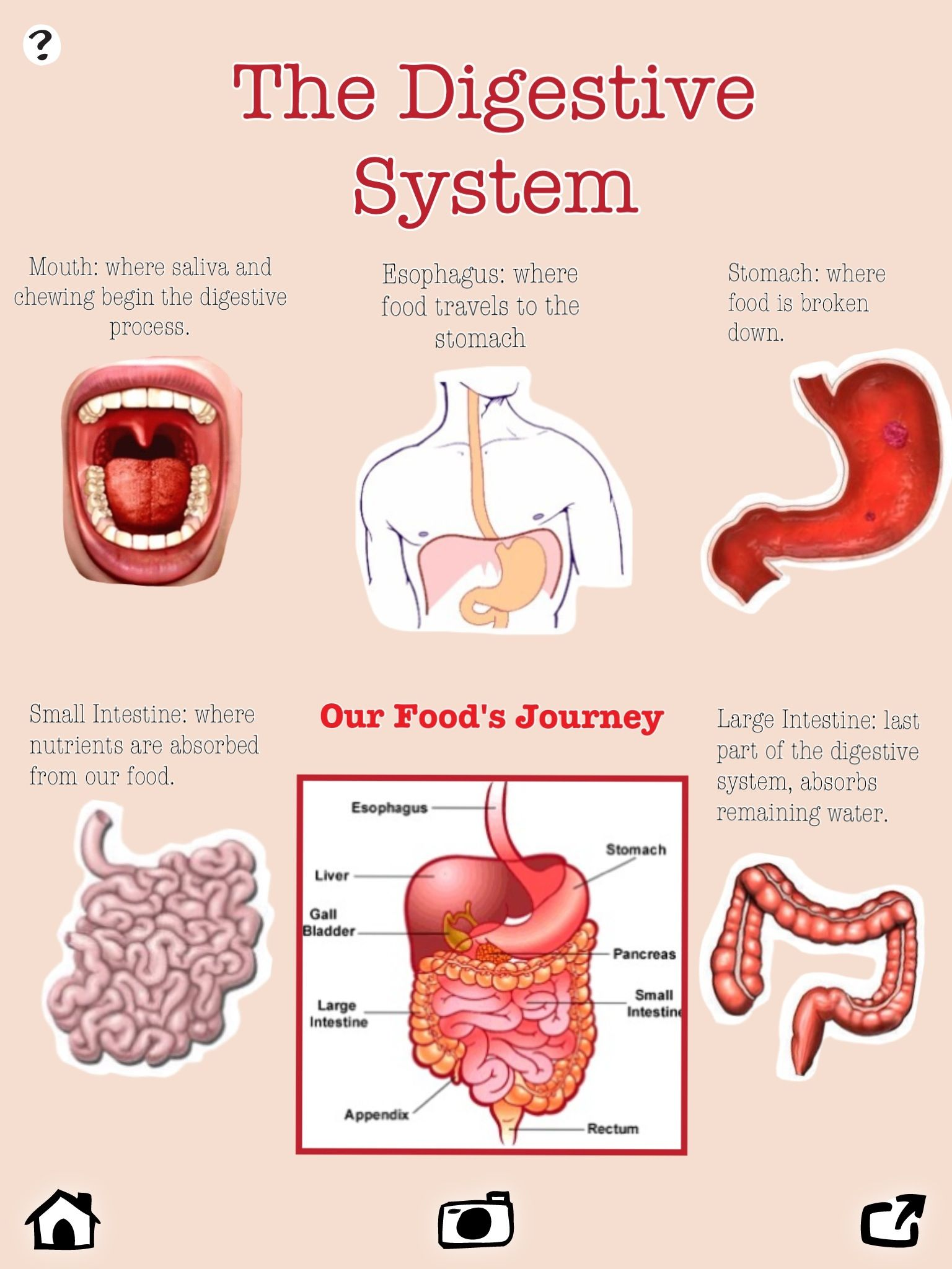 Digestive system piccollage in the classroom pinterest digestive system ccuart Images
