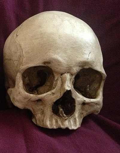 Human Jaw Tattoo: Toothless-and-aged-human-skull-prop-life