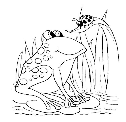 Ladybug And Frog Coloring Pages Repteis E Anfibios Colorir