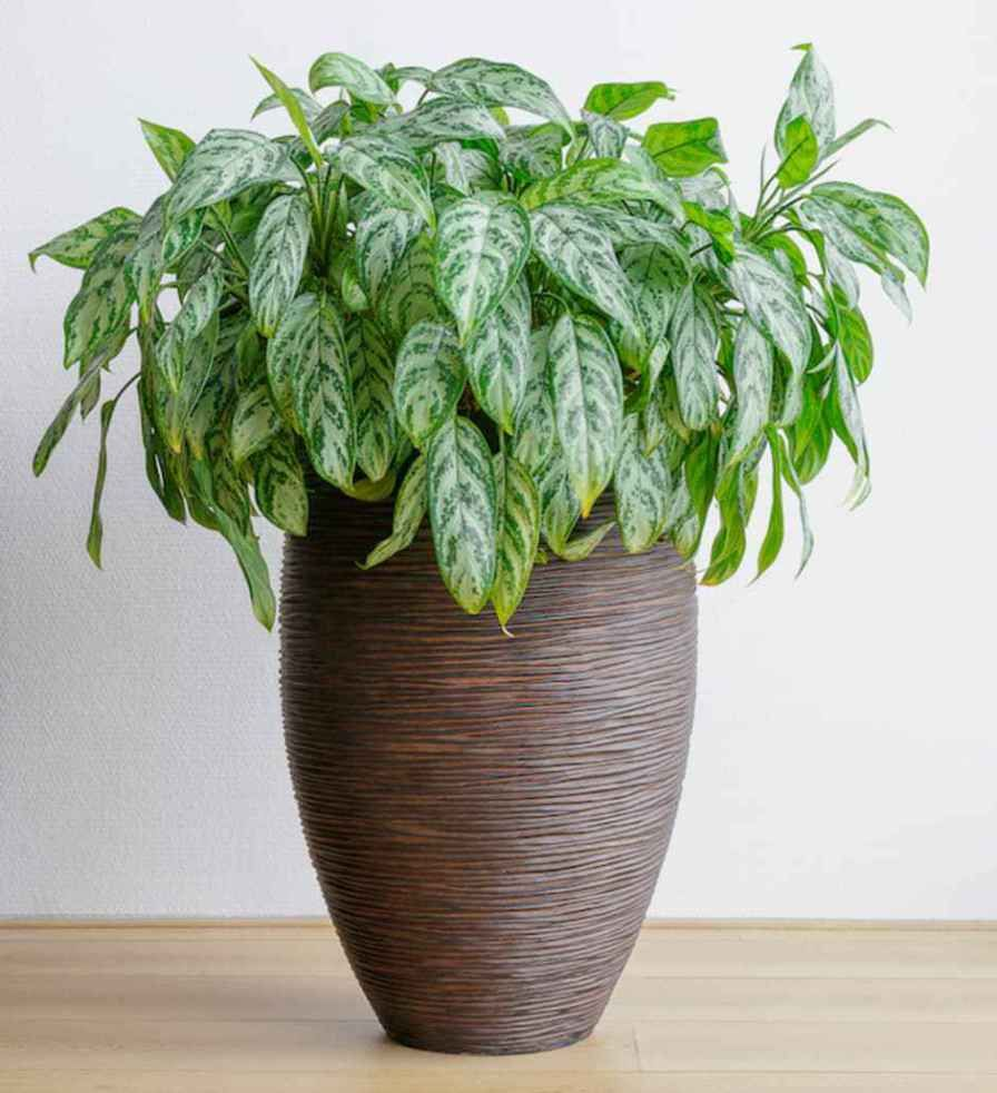 House Plants For Shady Rooms: Low-Light-Loving Houseplants That Can Survive In Sun