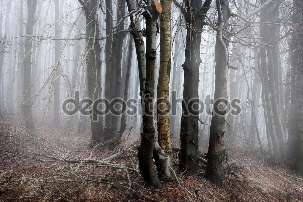 Lost in Mist — стокове зображення #94185990