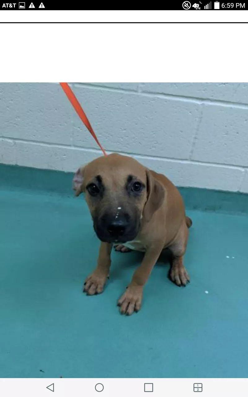 7 11 19 High Kill 4 Mos Old Wilbur A315604 Memphis Animal Services On Facebook Dog Pounds Dog Adoption Animals