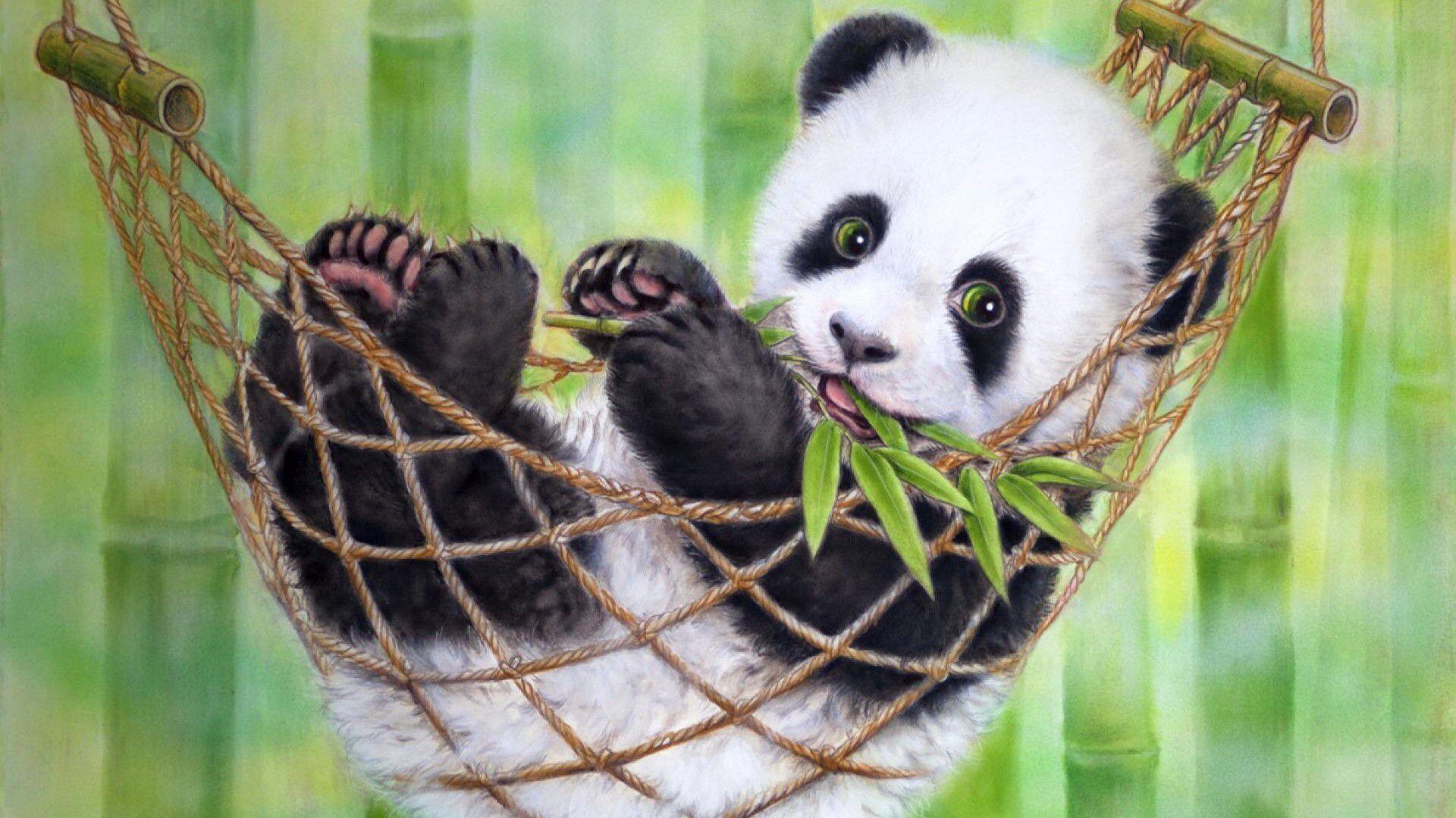 Hello There Panda Bears Wallpaper Panda Bear Baby Panda Bears Best of wallpaper cute baby panda cute