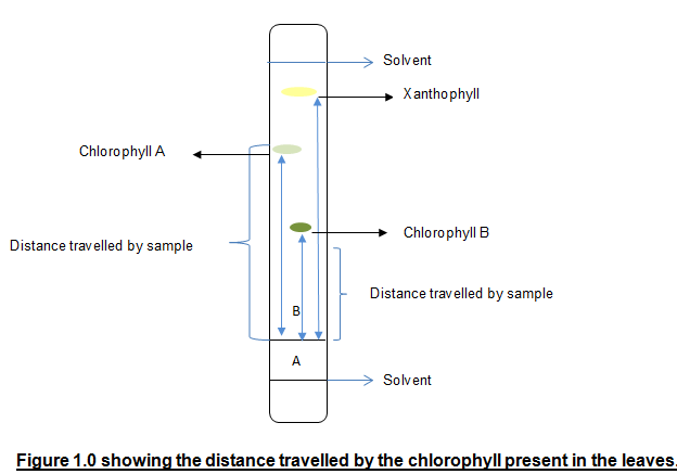 an analysis of an experimental procedure on the use of chromatography paper Chromatography: be a color detective  paper chromatography is a method used by chemists to separate the constituents (or parts) of a solution  repeat the previous procedure but replace the .