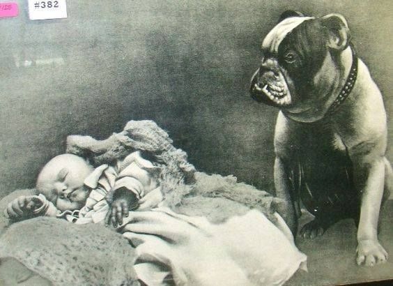 1900 Coleccion C H Victorian Bulldog Old English Bulldog