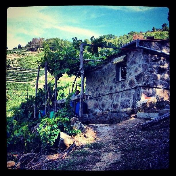 Bodega En La Ribeirasacra By Esther G Ferrero Instagram Ribeira