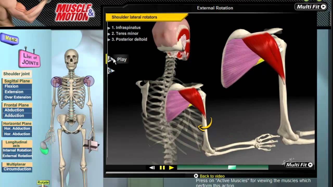 Muscle and Motion - Kinesiology. Learn to analize movements and ...