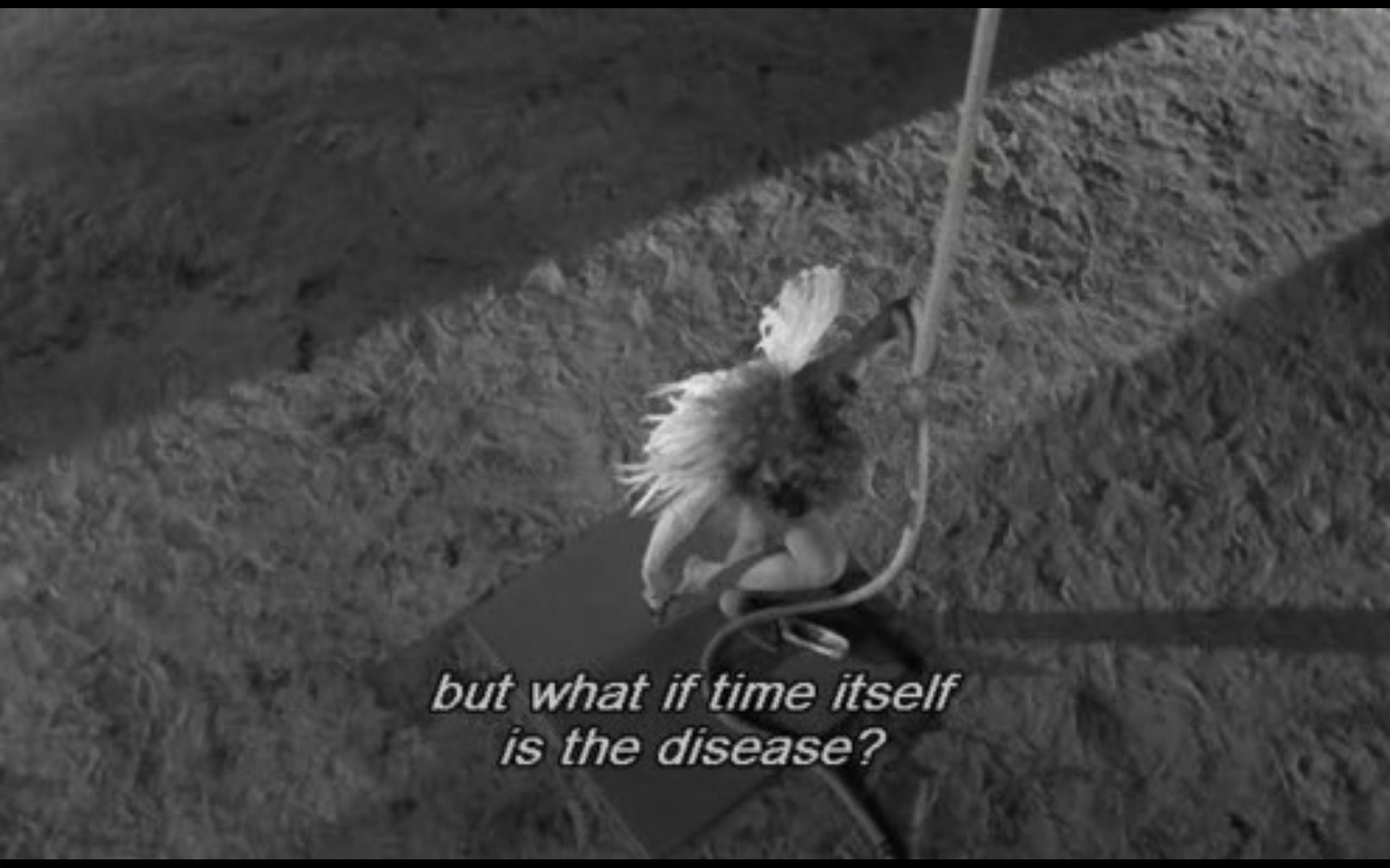 Wings Of Desire Wim Wenders 1987 Mood In 2019 Film Quotes