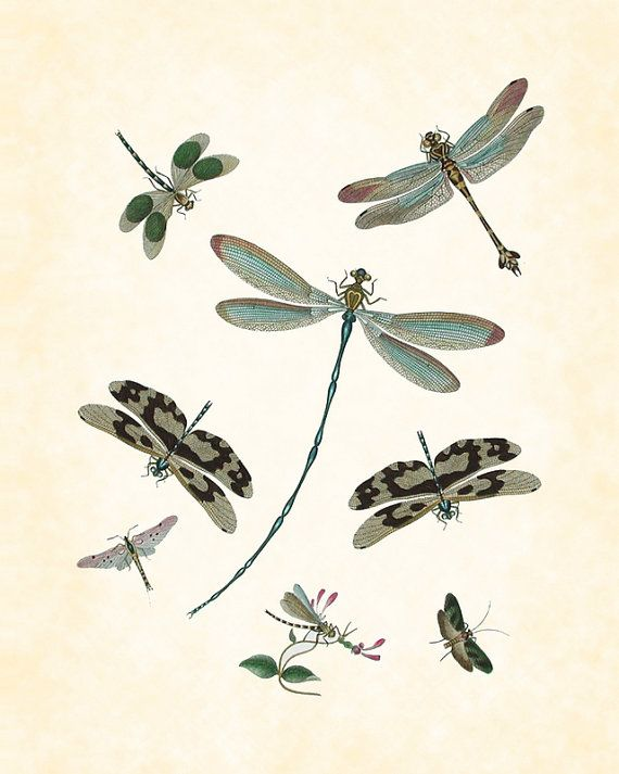 Vintage Dragonfly Plate 1 Art Print 8 x 10 by BelleMaisonArt, $10.00