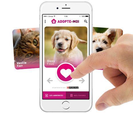 Chiots maltraités (urgent, pas de fa) : chiot chien créole à adopter dans la région DOM/TOM