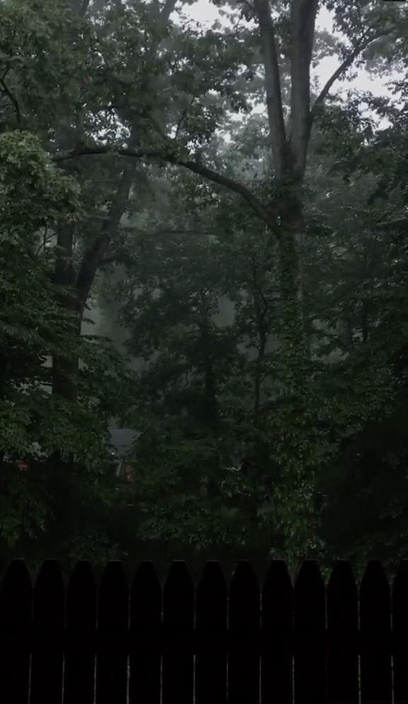 #aesthetic #rain #forest #fresh #beautifulnature