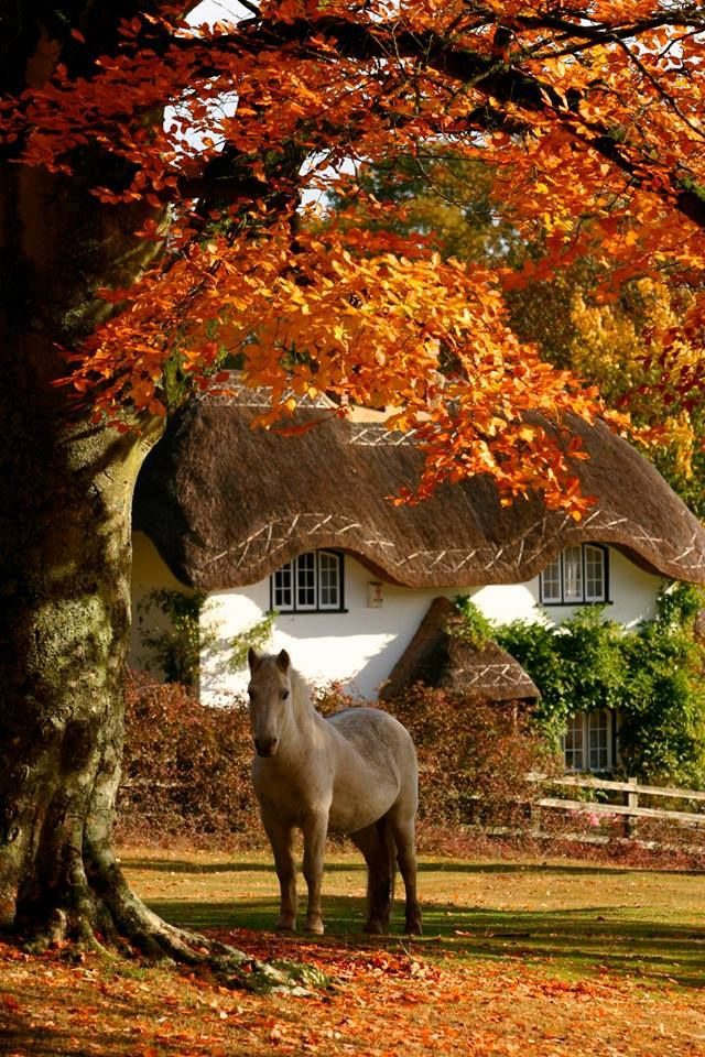 New Forest, England. known for its wild ponies, thatched cottages and ancient trees.