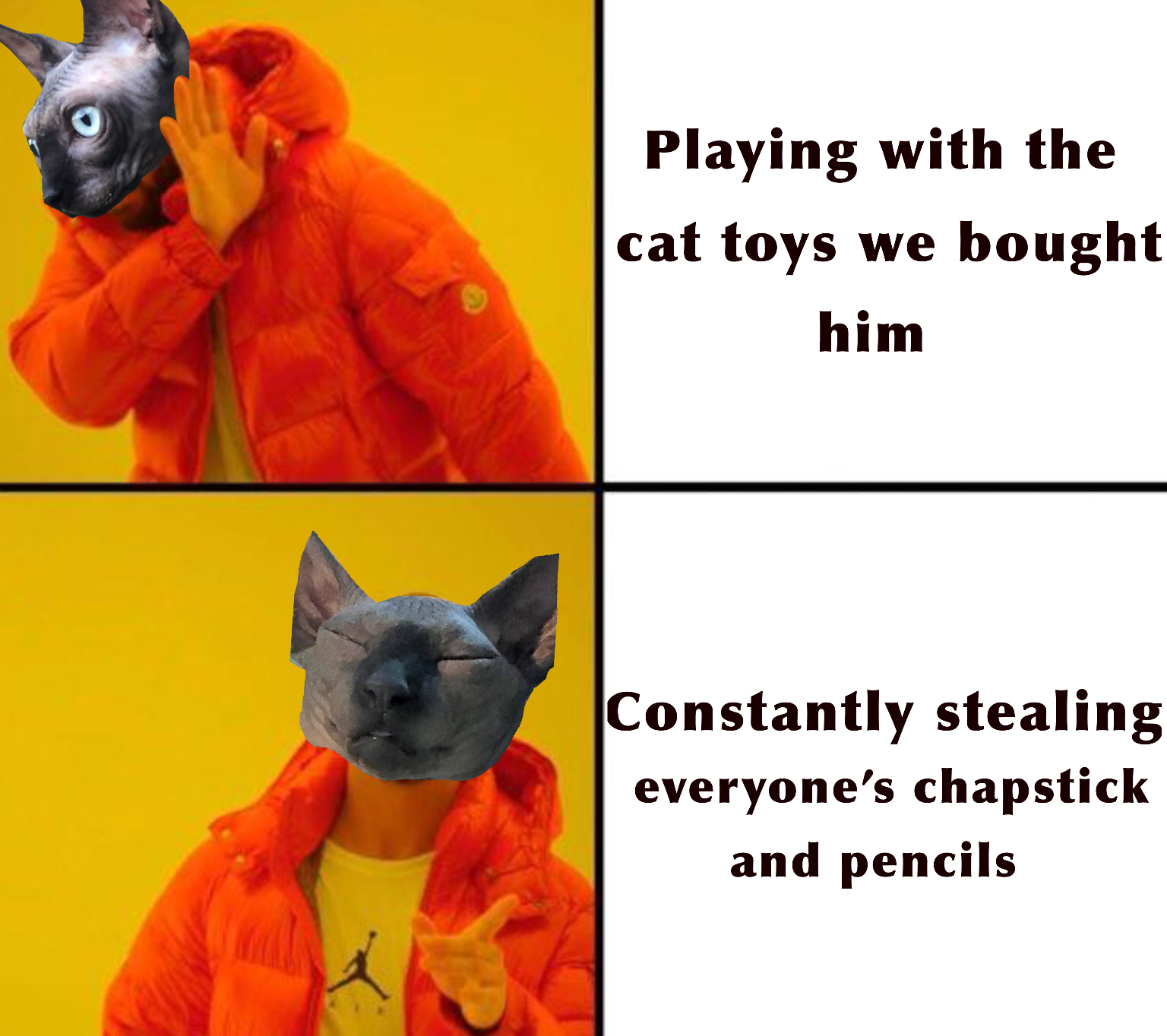Pin on Cat Memes