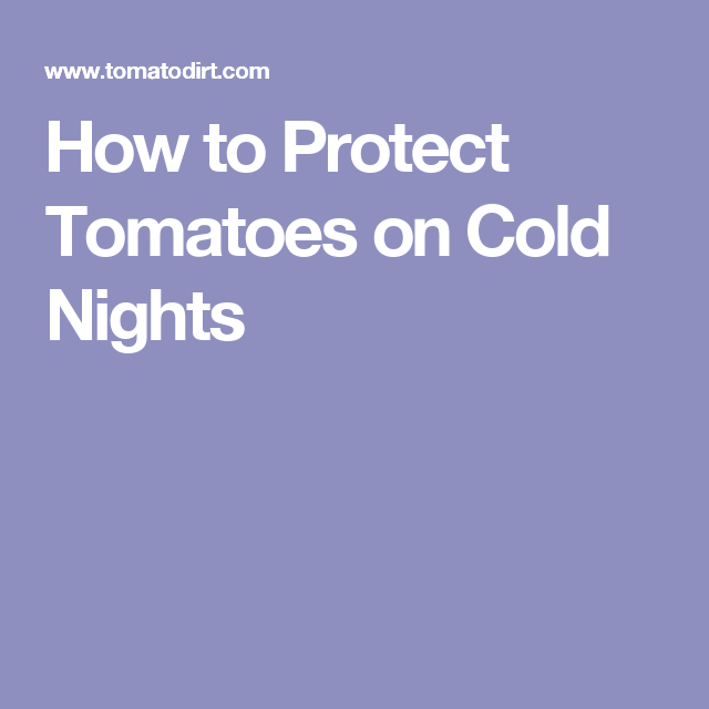 How to Protect Tomatoes on Cold Nights