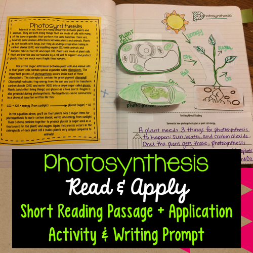 Photosynthesis Read & Apply Reading Passage, Interactive