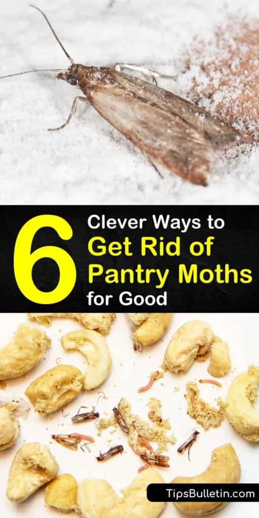 How To Get Rid Of Moths In My Food Pantry