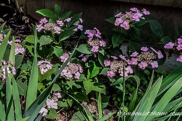 15 Stunning Perennial Ground Cover Plants That Thrive in the Shade #shadeplantsperennial