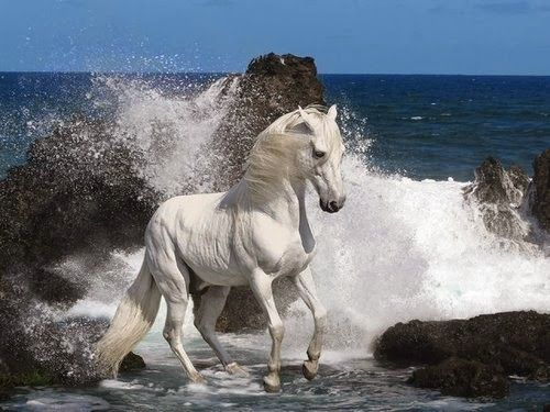 horse wallpaper 49 beautiful pictures of horses                                                                                            ...