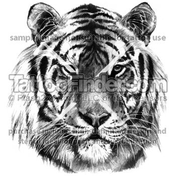 Tattoofinder Com Detailed Tiger Tattoo Design By East Tattoo Black And Gray Realism