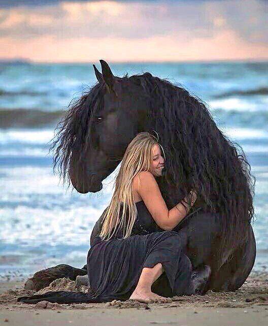 Aüd™ (@CodeAud) | Twitter | Horses, Pretty horses, Animals