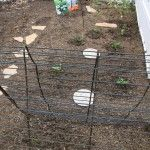 Recycled guards from air conditioners are used as a trellis for cucumbers, peas and squash.