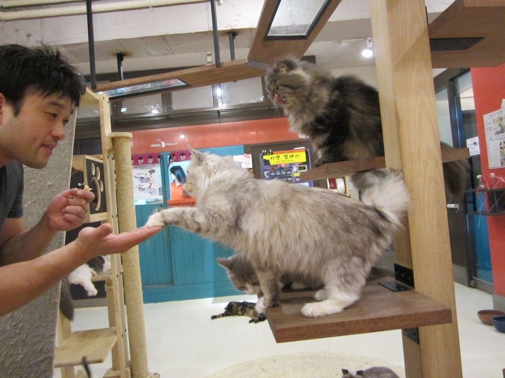 Pin On Acrocat Cafe Chicago Idea